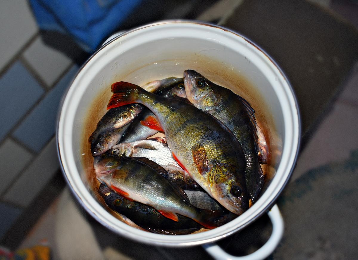 На реках Ярославской области в связи с нерестом введен запрет на промышленное рыболовство