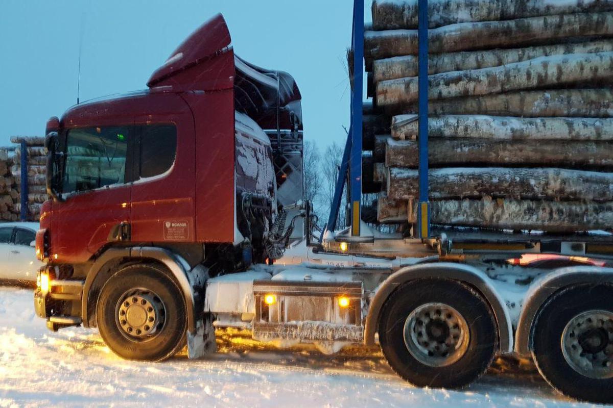 Губернатор Ярославской области: нам удалось пресечь незаконный оборот древесины