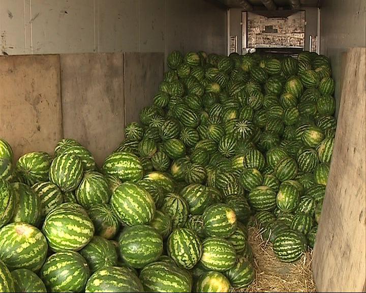 В Угличе уничтожили почти 234 кг санкционных фруктов