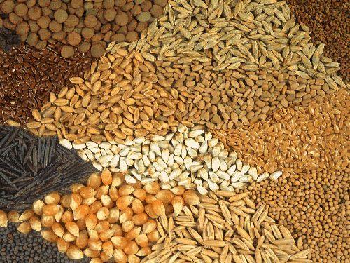 Трудный хлеб казахских степей
