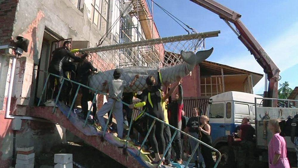 ВИДЕО: раскрыты подробности незаконного вывоза животных из Ярославского дельфинария