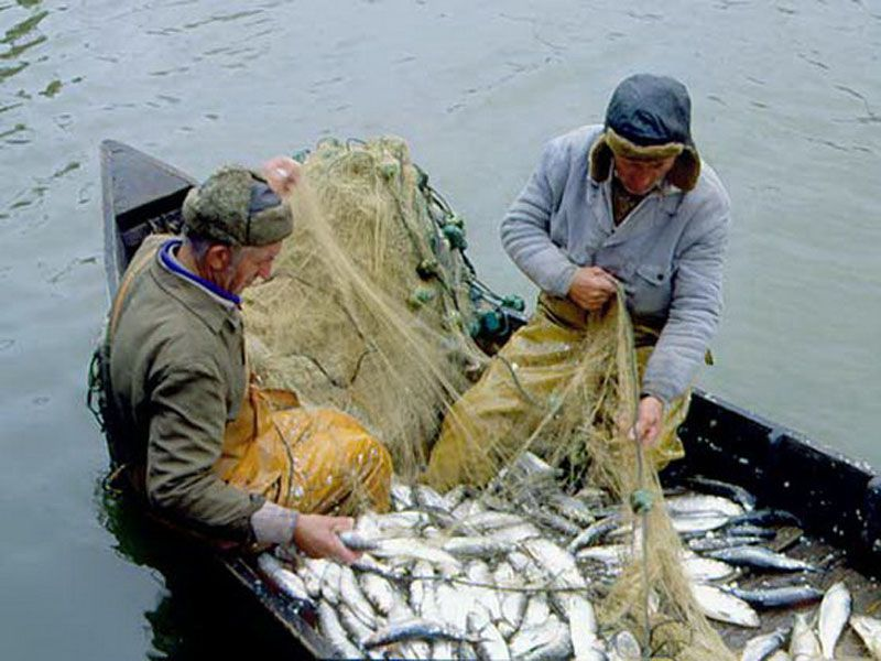 Ярославские депутаты хотят поправить закон о рыбалке