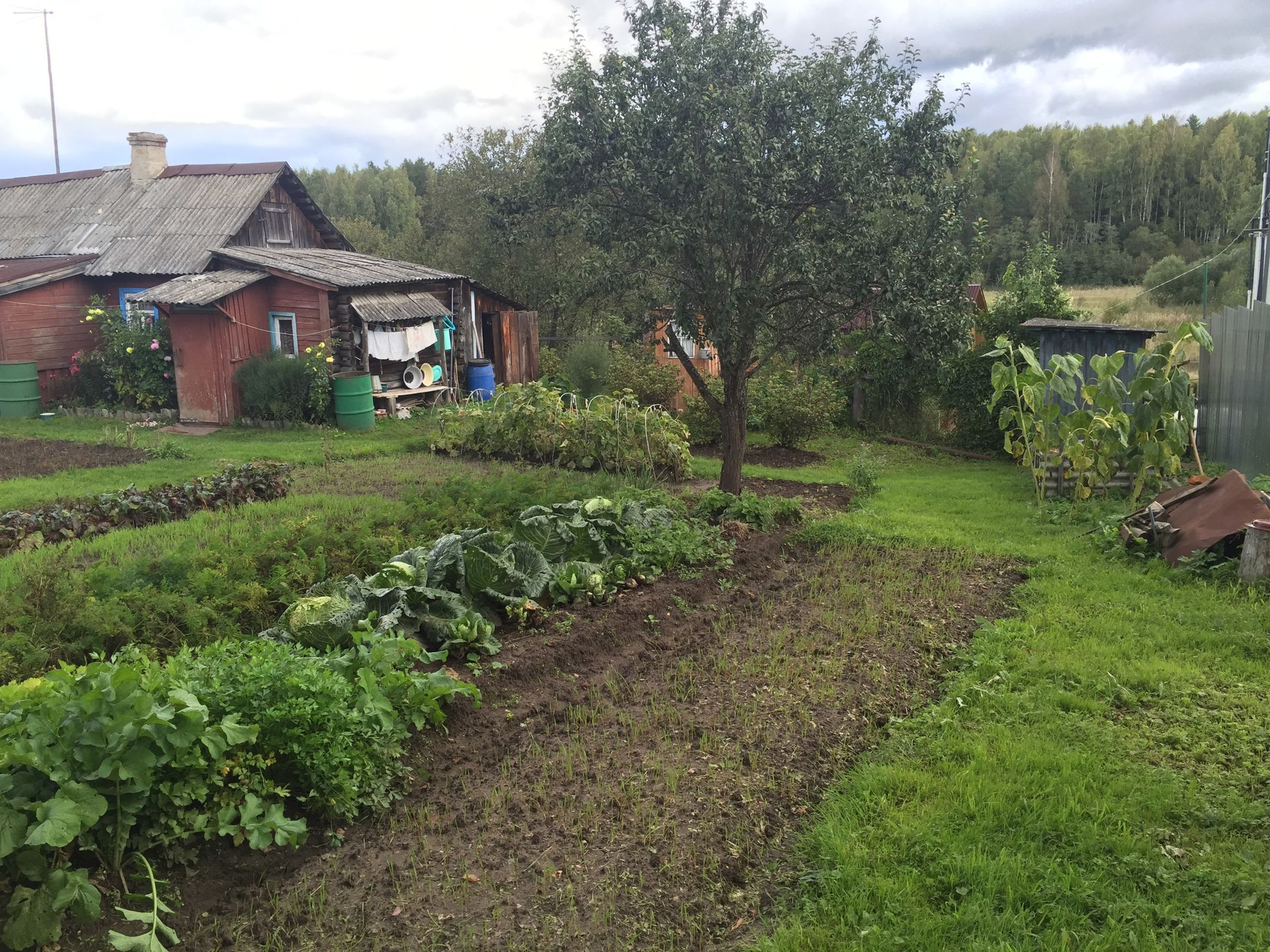 Садоводы сядут за парты. Ярославцев научат ставить на своей даче рекорды урожайности