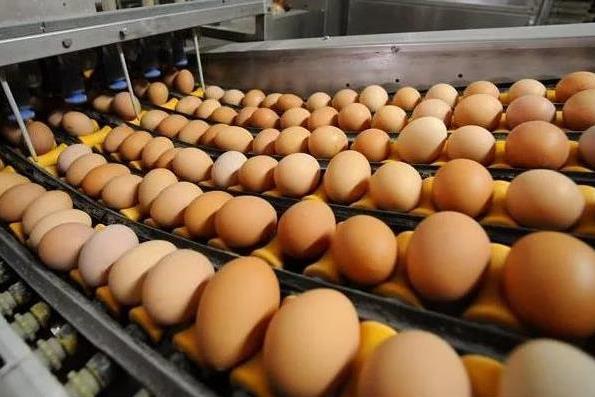 Куда делось яйцо? Ярославские птицефабрики не хотят продавать яйца «девятками»