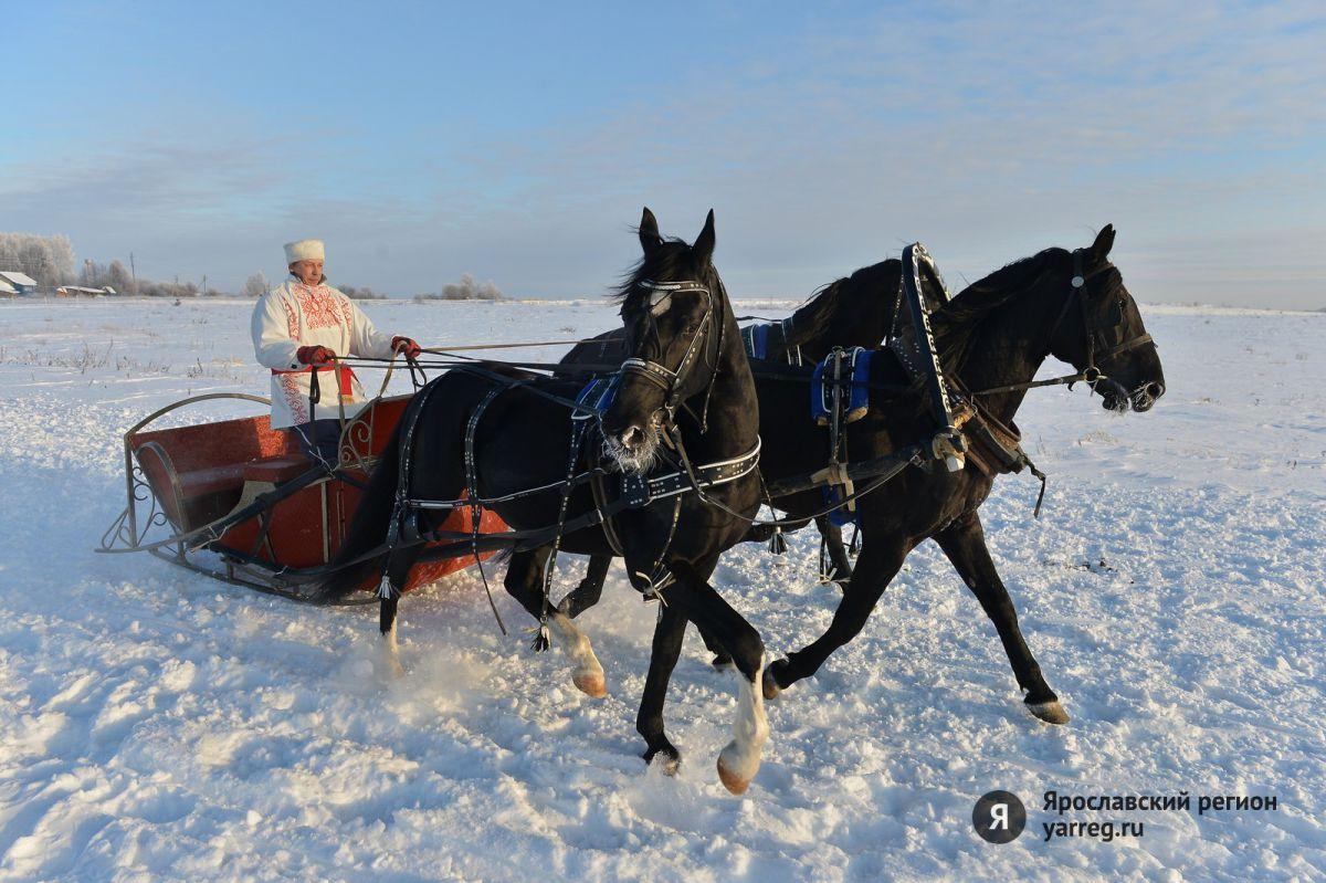 Ярославская тройка рысаков стала победителем чемпионата России