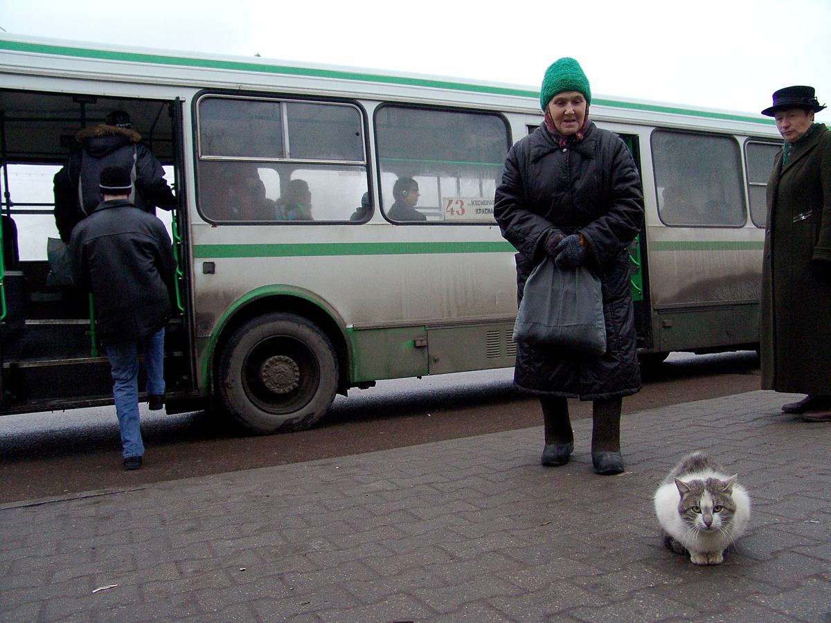 В Ярославской области подорожает проезд в пригородных автобусах